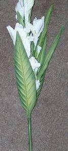 Floarea alba ale puritatii si norocului de urmasi