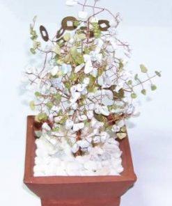 Copacel cu cristale de jad, howlit, opal si monede